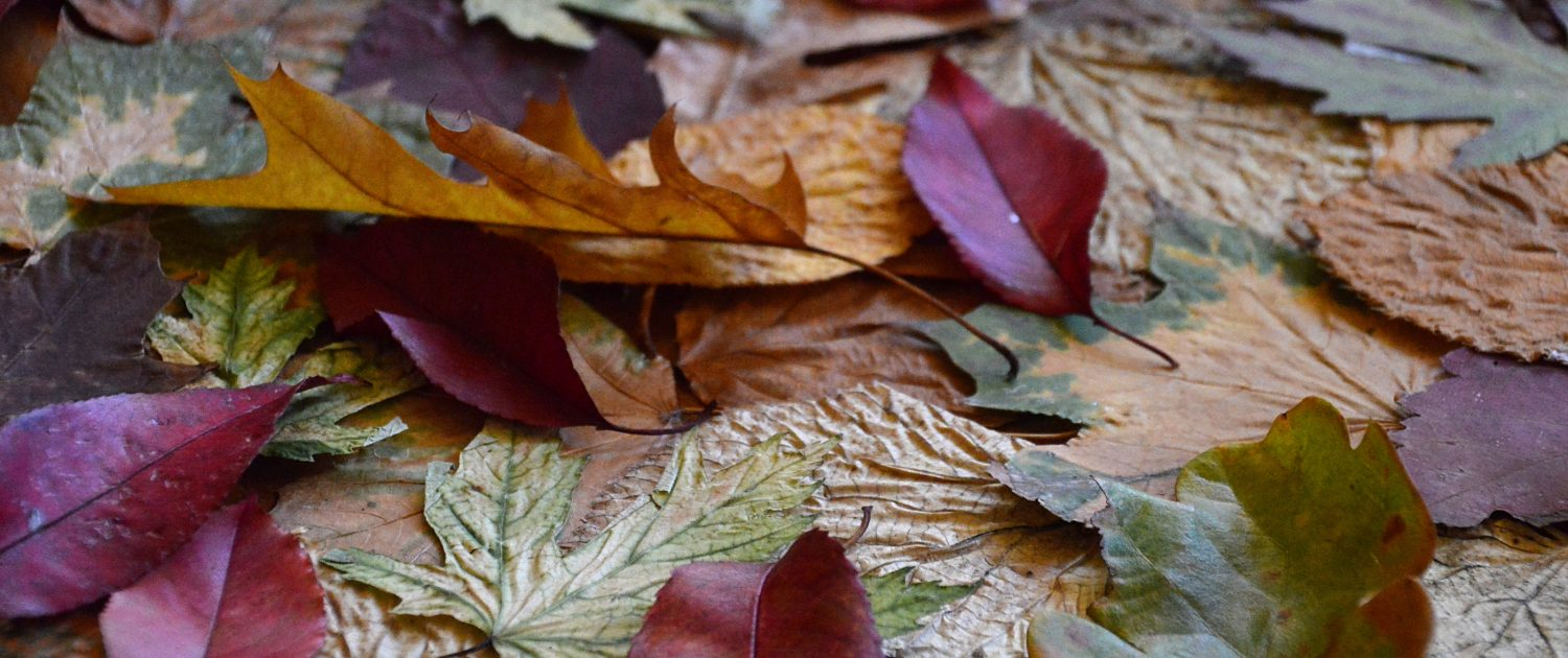 Multi-coloured Autumn Leaves on Ground - Sandra Harewood Counselling - Counselling for Grief and Loss