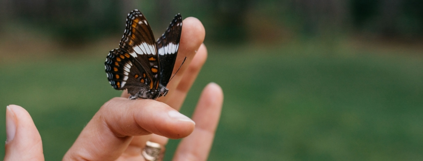 Butterfly on a woman's finger - Scared of Being Vulnerable? Here's the Truth-Sandra-Harewood-Counselling