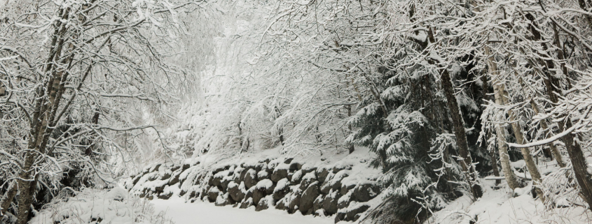 One ThingTrees Covered With Snow - You Should Know About The Pain Of Grief - Sandra Harewood Counselling